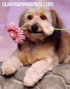 Perro con flor