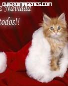 Felicita la navidad con este lindo gatito