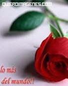 Díselo con una rosa