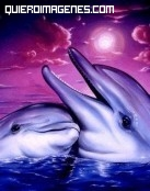 Abrazo entre delfines