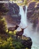 Renos en una cascada