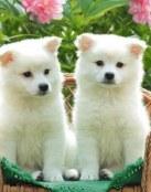 Dulces cachorritos