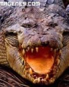 Las fauces del cocodrilo