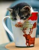 Gatito navideño