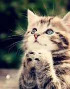 Un lindo gatito rezando