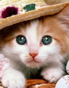 Un gatito con sombrero