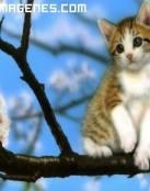 Gato en Arbol