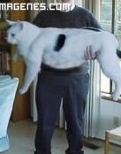 Un gato gigante