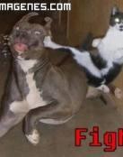 Gato luchador