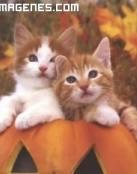 Gatos en una calabaza