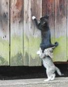 Dos gatos que se ayudan