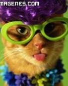 Gato muy colorido
