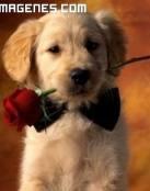 Un cachorro y una rosa