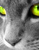 Mirada felina