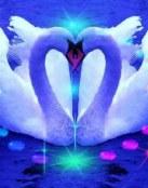 Dos cisnes