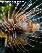 Exótico pez león