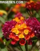 Preciosa planta exotica