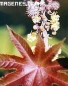 Planta con forma de estrella