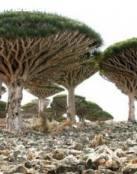 Plantas exoticas