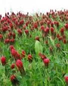 Plantas rojas