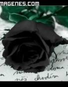 Rosa negra sobre carta