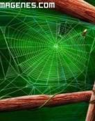 Tejiendo la tela de araña