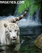 Tigre albino en una cascada