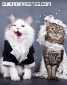 Un matrimonio felino
