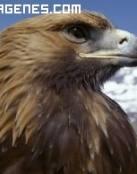 Imagen de un águila en lo alto