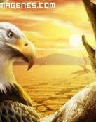Aguila en paraje seco