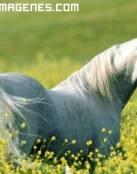 Imagen de caballo blanco