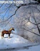 Imagen de un caballo en la nieve