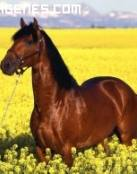 Imagen de caballo entre flores