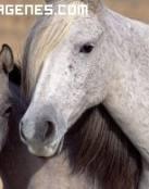 Imagen de caballos juntos
