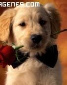Imagen de un cachorro con una rosa