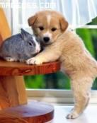 Imagen de un cachorro y un conejito