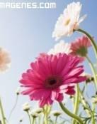 Delicadas flores en cajita