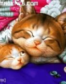Gatitos durmiendo