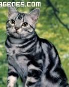 Imagen de gato ilustre