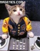 Gato pinchadiscos