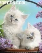 Gatitos lindos