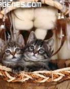 Imagen de gatos en el cesto
