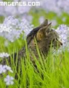 Imagen gato entre la hierba