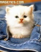 Imagen de gato de bolsillo