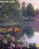 Imagenes de Ciervos