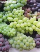 Uvas de Colores