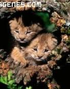 Imagen de leoncitos escondidos