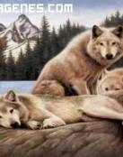 Lobos en el lago
