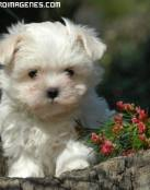 Imagen de un Perro Blanco