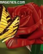 Rosa roja en 2D